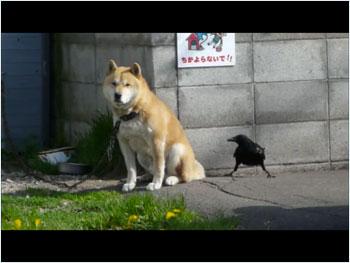 犬とカラス2