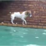犬が素潜りでナマズを捕まえる!?