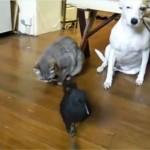 カラスが犬と猫に餌をあげる!?