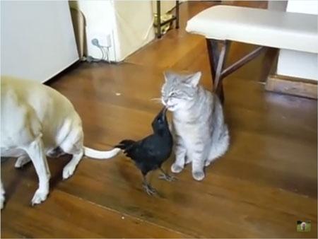 犬猫カラス