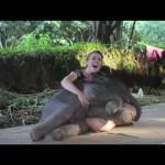 スリスリ!!象の赤ちゃんが懐いてくるのが超かわいい!!