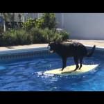 超クール!ボディボードに乗る犬!